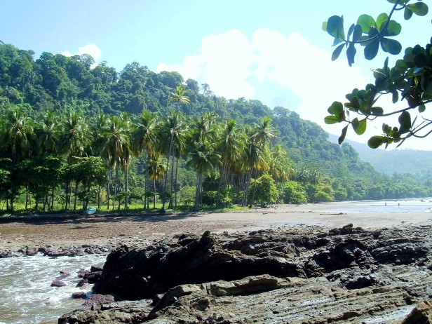 The beach and jungle in Costa Rica