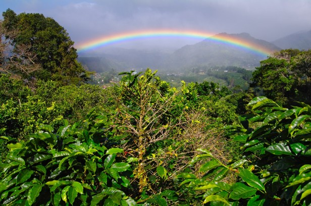 A rainbow over the jungle