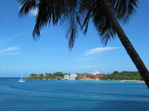 sosua palm tree and sea