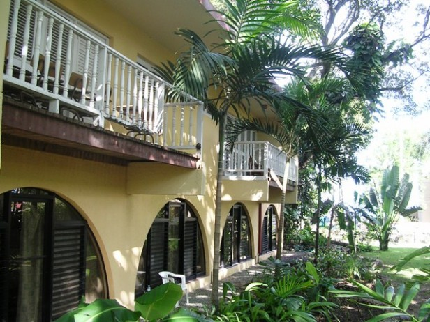 leafy apartments and studio in Sosua