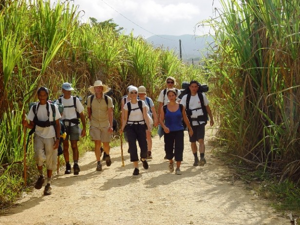 Sunny Caribbean, group hiking in sugar cane fields
