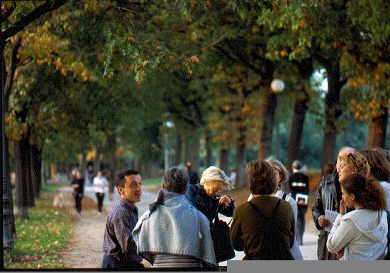 People in an avenue of trees in Lucca