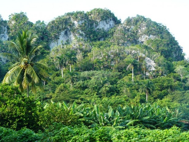 Cuban landscape limestone mogotes in Vinales