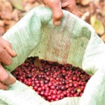 Coffee beans in a sack in Columbia