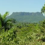 flat topped mountain and palm trees