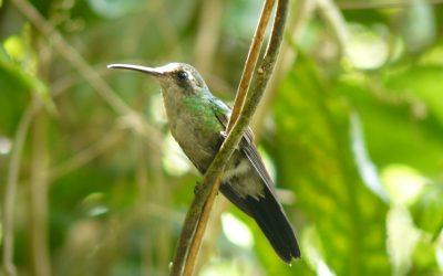 green bird on a branch