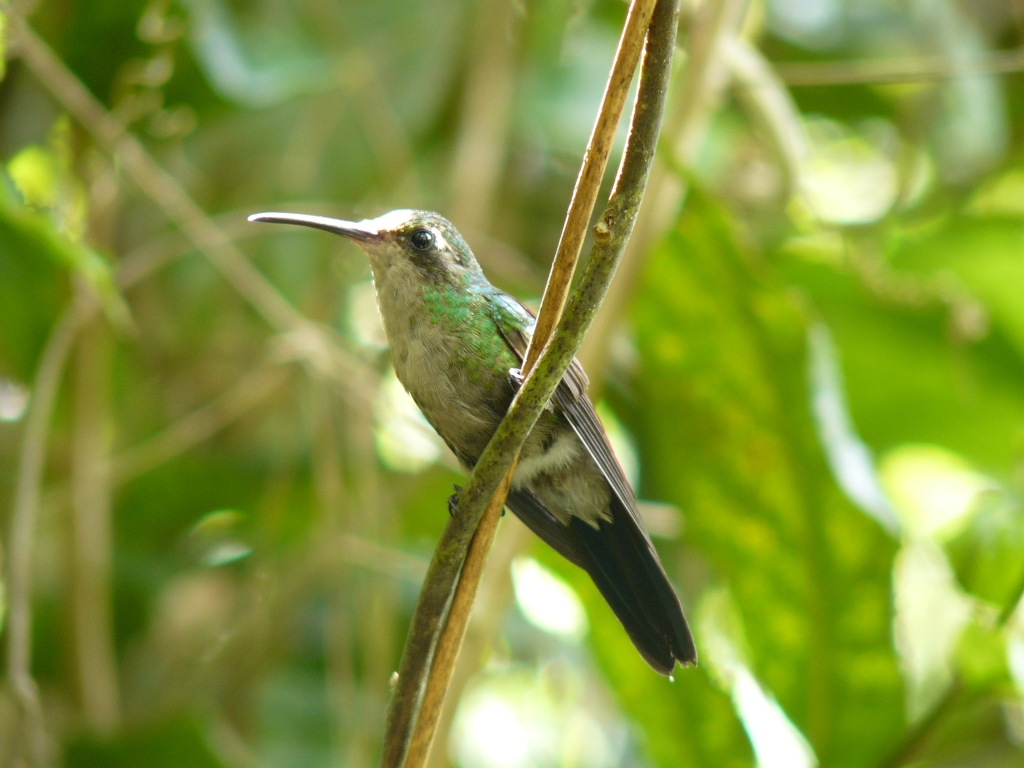 Cuban hummingbird spotted in Alexander Humboldt National Park | Reasons to visit eastern Cuba