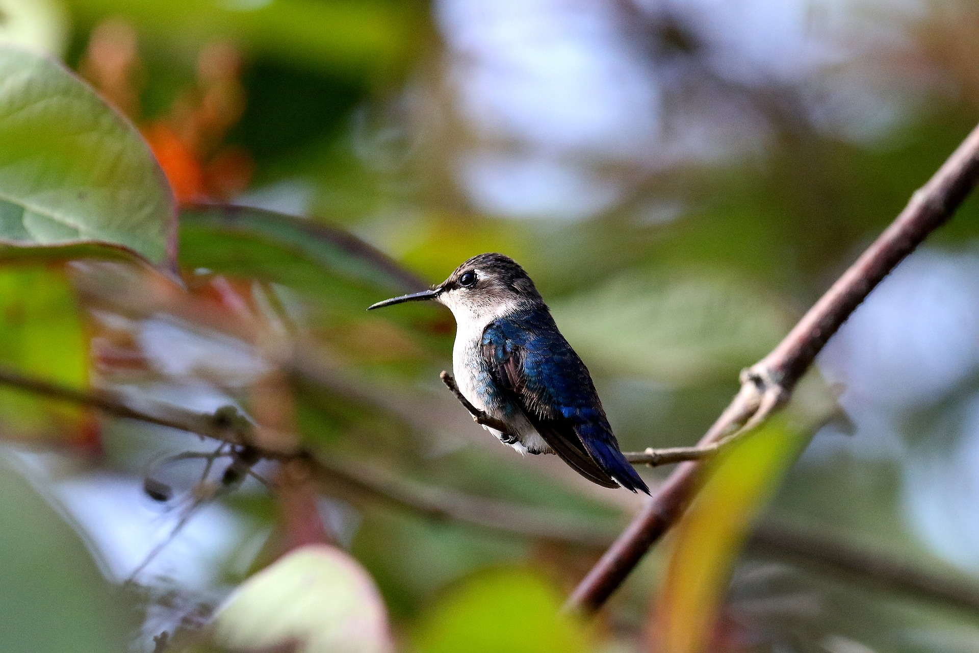 Cuba is home to the smallest bird in the world | Facts about Cuba